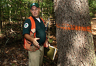 Matthew Paul, senior forester with the Department of Environmental Conservation Division of Lands and Forests,  stands next to a tree marked to be cut down in the Vernooy Kill State Forest in the Town of Wawarsing on Monday, Sept. 14, 2009.