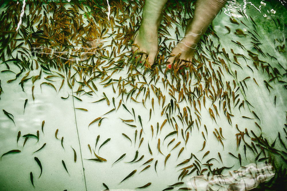 Fish pedicure at a Spa. Doctor fish is the name given to the species of fish Garra rufa. Other nicknames include nibble fish, kangal fish, physio fish, and doctorfishen; in non-medical contexts, Garra rufa is called the reddish log sucker. They live and breed in the pools of some Turkish river systems and hot springs. Modernly, they have been integrated as a spa treatment, where they feed on the skin of patients with psoriasis.