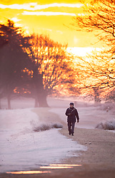 © Licensed to London News Pictures. 24/01/2019. London, UK. A man walks in Richmond Park, West London on a cold winter morning, as temperatures across the UK drop dramatically. Some parts of the UK are expecting snowfall following a spell of low temperatures. Photo credit: Peter Macdiarmid/LNP