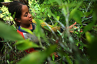A young girl picks coca during the last harvest in La Via Media, a remote coca growing area in the southern Colombian state of Nariño, on Saturday, June 23, 2007. All the coca in the immediate area is being pulled up as part of the manual eradication effort being conducted by the Colombian government in many parts of the country. Many coca farmers try to get in one last harvest before they have their crops destroyed. (Photo/Scott Dalton)