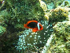 Underwater Kimberley