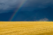 Stormy sky and rainbow over hay field with mountains in background