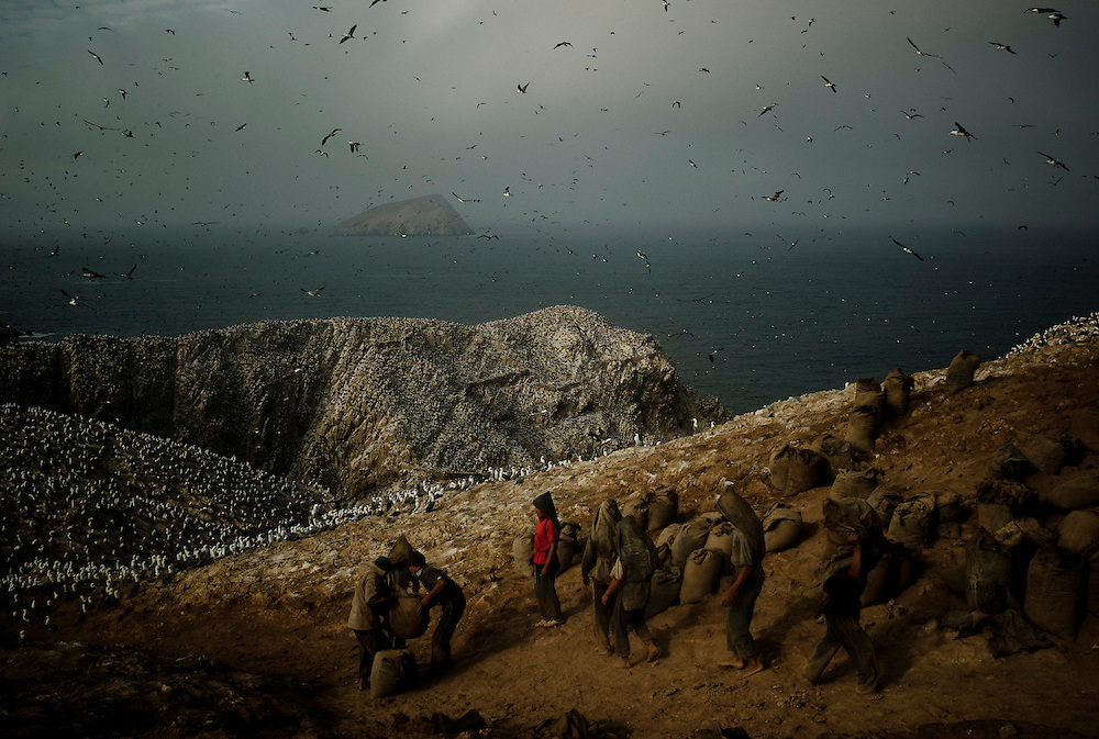 Porters wait for a sack of guano to carry, Guañape Norte Island in the coast off Peru, May 2008. The government-run company that harvests the guano, a strategic fertilizer that is later subsidiased to local farmers, is in a way the best protector of bird´s population. They have guards in almost every island to make sure that no one comes there to disturb the birds in their nests or to extract guano.