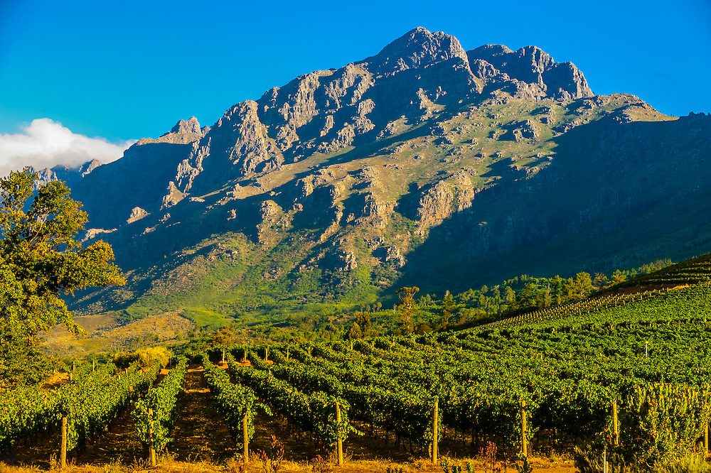 Oldenburg Vineyards, Banghoek Valley, Stellenbosch, Cape Winelands, South Africa.