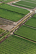 Sugarcane Plantations & empty Canal Punts<br />