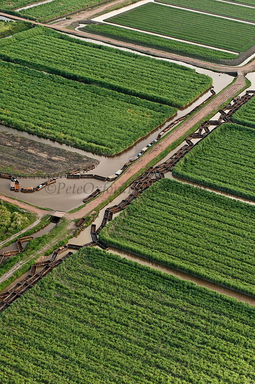 Sugarcane Plantations &amp; empty Canal Punts<br /> Georgetown<br /> GUYANA<br /> South America