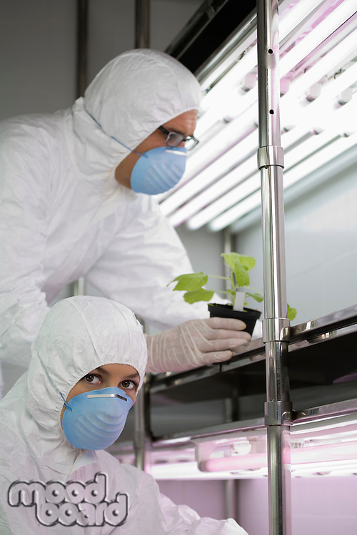 Workers in protective masks and suits in laboratory with plant