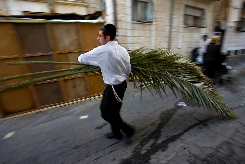 """An Ultra orthodox Jewish man carries palm fronds to be used to build a Sukka, in the Mea Shearim ultra Orthodox neighborhood of Jerusalem, Israel, Oct. 30, 2009. According to the Bible, during the Sukkot holiday, known as the Feast of the Tabernacles, Jews are commanded to bind together a palm frond, or """"lulav,"""" with two other branches, along with an """"etrog,"""" they make up the """"four species"""" used in holiday rituals. The week long holiday begins Friday...Photo by Olivier Fitoussi /ABACAUSA.COM"""