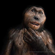 Paranthropus boisei.  Museo de la Evolución Humana (MEH). Burgos. Spain.