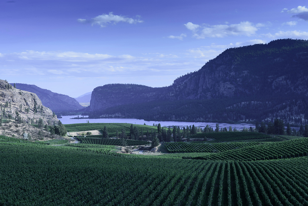 North America, Canada, Canadian, British Columbia, Penticton, Vaseux Lake, Vineyards,