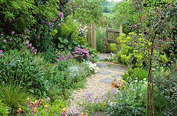 Early summer in the gravel garden . Gravel path with gate leading to the orchard meadow area.