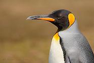 Falkland / Islas Malvinas