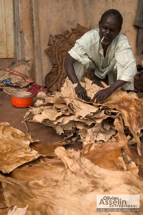 Man rubbing oil on goat leather to increase flexibility at a local tannery in Tamale, Northern Ghana.