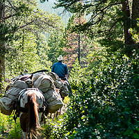 horse packing in the badger two medicine