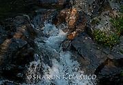 MOUNTAIN STREAM & FLOWERS 20.JPG  North Cascades, Washington
