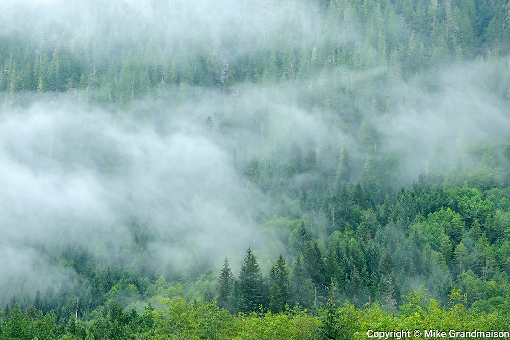 Coast Mountains in fog, Prudhomme Lake Provincial Park, British Columbia, Canada