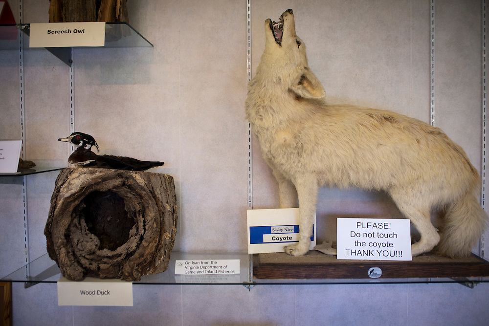 Grottoes, Virginia - Outside the entrance to Grand Caverns in Grottoes stuffed animals and geological relics are on display.