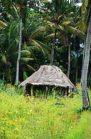 A simple hut in a jungle clearing in Bali, Indonesia.
