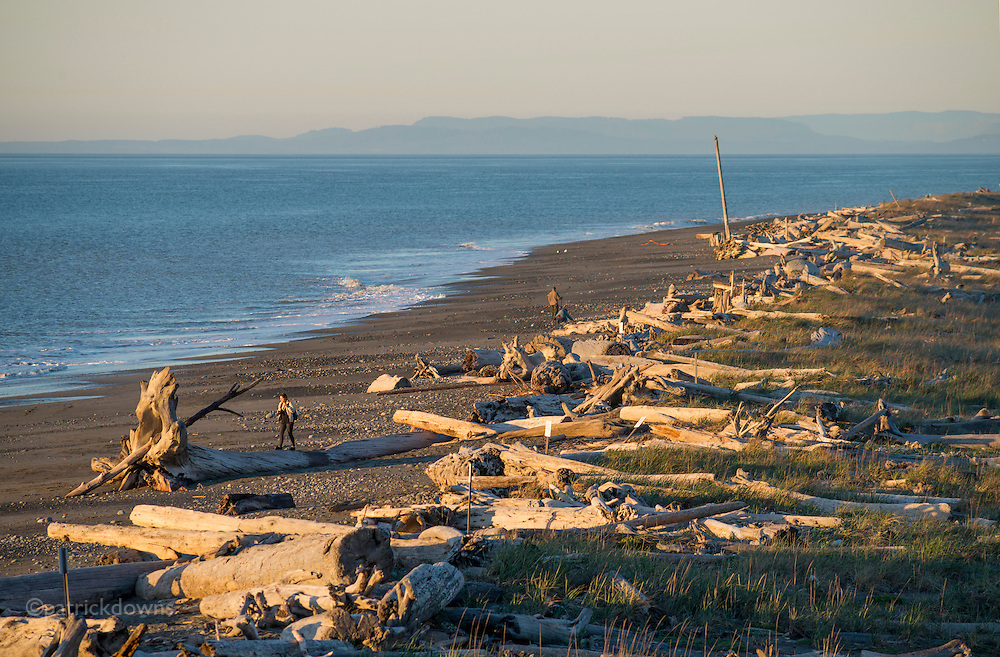 "The Dungeness Spit is a field of ""bones""— entire logs that wash ashore. The Spit is a 5 mile long sandbar, one of the longest in the world, that reaches out into the Strait of Juan de Fuca in Washington. In the distance is mainland Washington north of Seattle."