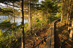 A wooden walkway in Acadia National Park Maine USA