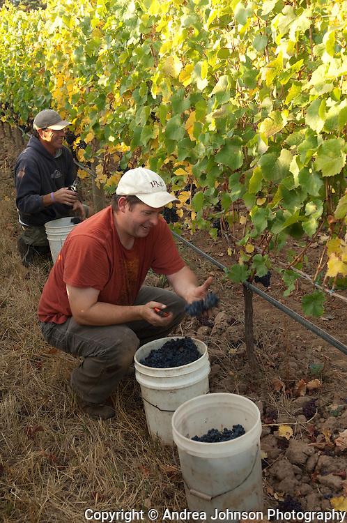 Harvest at Bergstrom Winery, Yamhill-Carlton AVA, Willamette Valley, Oregon