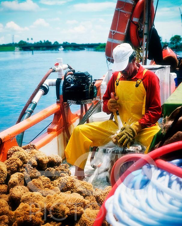 Sponge diver Antonis Kambourakis washes the  sponges on the deck of the traditional Greek sponge boat, the St Nicholas III, at the Greek sponge docks; Tarpon Springs, Florida, USA; August 2003;