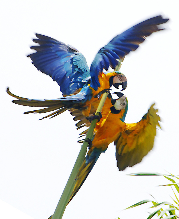 Travel - Parrots in the wild