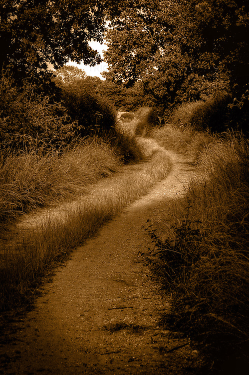 A curving country lane with hedgerows and trees in Suffolk England