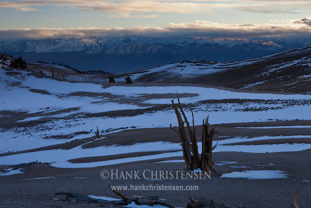 The sun sets over the Sierra Nevada as shadow falls on the Patriarch Grove, Ancient Bristlecone Pine Forest