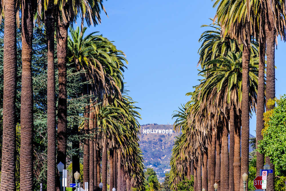 Hollywood Sign through palm trees in Los Angeles, California