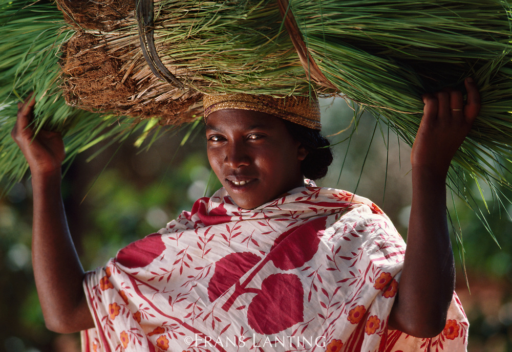 Betsileo woman carrying harvested rice plants, Central Madagascar