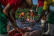 Maraã, Brazil - October 30, 2014: Fishermen cleans fresh pirarucu at a floating base in Maraã, to be sold on a pirarucu fair in Tefé, western Amazon region. CREDIT: Photo by Mauricio Lima for The New York Times