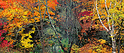 Autumn Forest, Baxter State Park, Maine 1995