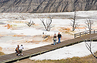 Tourists walking on the boardwalks on the main terrace of Mammoth Hot Springs, Yellowstone national Park, Wyoming, USA.