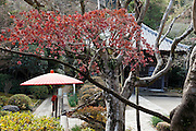 the Jufuku-ji temple in Kamakura Japan
