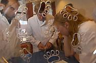 NLD, Niederlande: Veterinär J.T. Lumeij, Spezialist für Vögel und Exoten, drückt einen großen Harnstein aus einem jungen Python, Universitätsklinik für Gesellschaftstiere, Fakultät der Tierheilkunde, Utrecht | NLD, Netherlands: Veterinary J.T. Lumeij, specialist for birds and exotic animals, pressing a large urinary calculus from a young Python,..university clinic for companion animals, faculty of veterinary medicine, Utrecht |