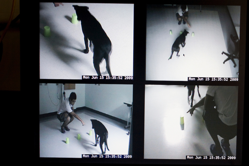 The Duke Canine Cognition lab is equipped with multiple surveillance cameras to observe the natural behavior of dogs during tests designed to explore their cognitive thinking skills. The lab is located on the campus of Duke University in Durham, N.C., Monday, June 15, 2009.