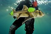 Port Jackson Sharks