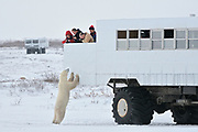 Tundra buggy to view polar bears<br />CHurchill<br />MAnitoba<br />Canada