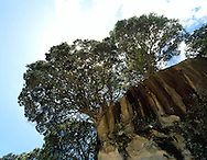 Cliff face and trees near Cathedral Cove, Coromandel Peninsula, north island, New Zealand. 1999