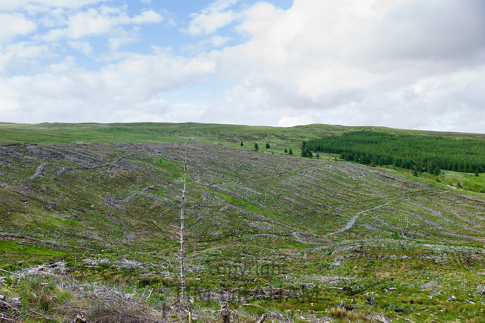 Razed forest of pine trees stripped for timber at Forestry Commission coniferous plantation in Galloway Forest Park, Carrick, Argyllshire, Western Scotland