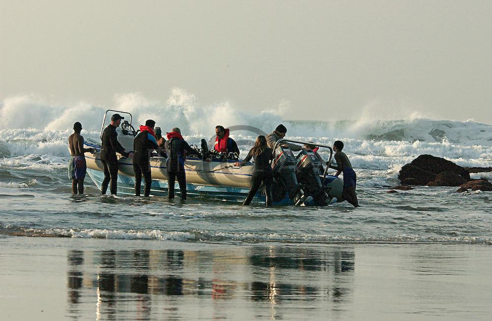 South Africa, Wild Coast, Sardine Run, dolphins, Sharks, sardine, gannets