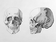 Graphite drawing of the human skull in the anterior and lateral position.