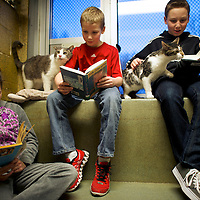 "(L-R) Kaitlyn Karkoska, Seth Wiggins, and Ethan Wiggins read to ""Stewart"" and ""Tyler,"" cats up for adoption, as part of ""The Book Buddies Program"" at the Animal Rescue League of Berks County in Birdsboro, PA on February 11, 2014.  Children in grades 1-8 read to the cats as a way to improve their reading skills and gain confidence.  The shelter animals can be a non-evaluative presence that can provide support and comfort to participants without judging them.  Students showed sustained focus and maintained a higher state of awareness, as well as improved attitudes toward school, according to researchers at Tufts University.  Photo taken February 11, 2014.  REUTERS/Mark Makela  (UNITED STATES)"