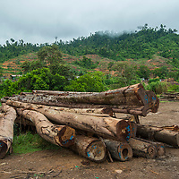 Felled trees ready for transportation out of Imbak Canyon Conservation Area, Sabah, Malaysia, Borneo, South East Asia.