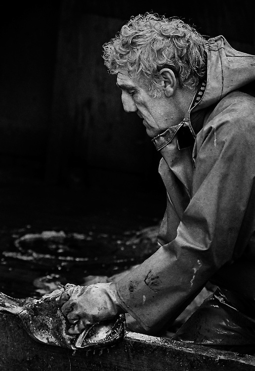 Barrie Howes, a fisherman for forty years, gutting monkfish, on PZ 198, the 'Aaltje Adriaantje', working out of Newlyn, Cornwall, England.<br /> <br /> Now considered a 'luxury' seafood, monkfish has become very popular, after being discarded for many years.<br /> <br /> (Please see Galleries for further information).