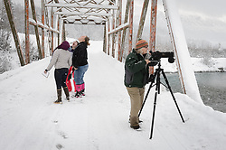 Students (left to right) Heidi Kattenhorn, Allison Stuart and Maggie Martin have a playful moment catching snow flakes during a lull in the counting of bald eagles (Haliaeetus leucocephalus) from the Klehini River Bridge, near the Porcupine Crossing turnoff. Pam Randles, Takshanuk Watershed Council Education Director, double checks to make sure she hasn't missed any eagles. Since 2009, students have been conducting a weekly count of bald eagles during the fall semester for the citizen science class at the Haines School. The project is part of a field-based for-credit class, sponsored by the Takshanuk Watershed Council, in which students participate in research studies and learn about field data collection. Under the guidance of Pam Randles, Takshanuk Watershed Council Education Director, students count bald eagles in the Chilkat River Valley using spotting scopes at 10 locations and present their data at the Bald Eagle Festival held in November in Haines. During late fall, bald eagles congregate along the Chilkat River to feed on salmon. This gathering of bald eagles in the Alaska Chilkat Bald Eagle Preserve is believed to be one of the largest gatherings of bald eagles in the world.