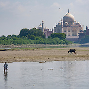 A man stands in the fetid waters of the Yamuna River near Dhobi Ghat in Agra, India, with the iconic Taj Mahal rising behind.