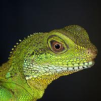 Reptiles + Amphibians