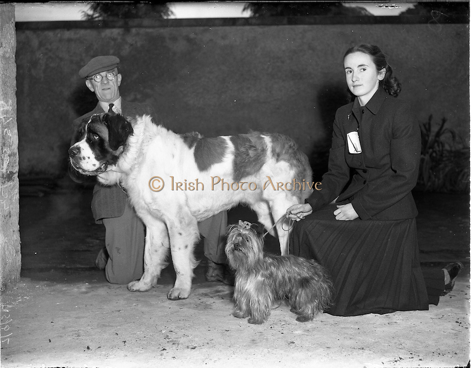 06/09/1952.09/06/1952.06 September 1952.Mount Merrion Dog Show held in Church Grounds.